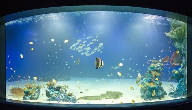 ライトアップされた夜の水族館に2人きり