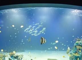 リーガロイヤルホテル広島のXmas宿泊プラン 夜のマリホ水族館貸切も