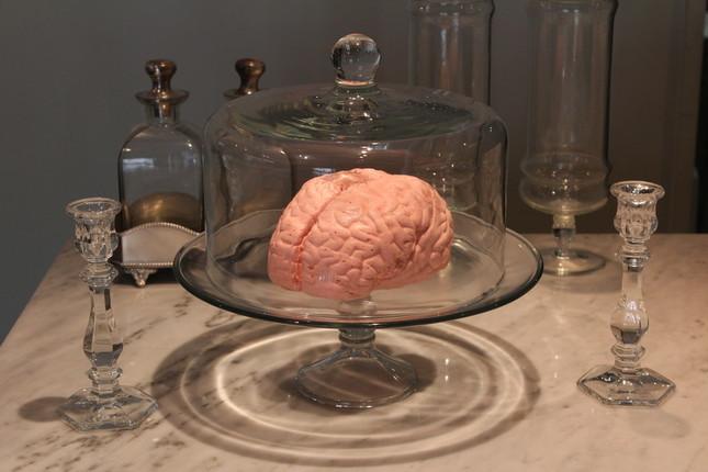 「実物大?!脳みそマシュマロ」