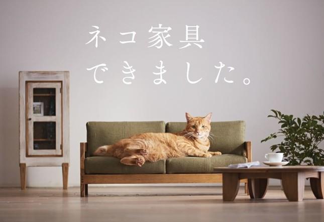 ネコ家具PRサイトより