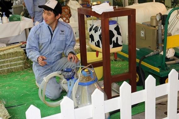 牛の搾乳体験も