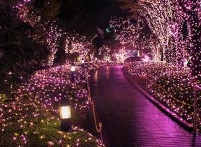 新宿テラスシティにピンクのイルミ 全長888メートルに輝く「真冬のサクラ」