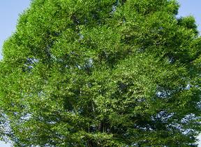 BOOKウォッチ「憲法特集」連載の第3弾 憲法、法律、規則...法令を「大樹」にたとえたら?