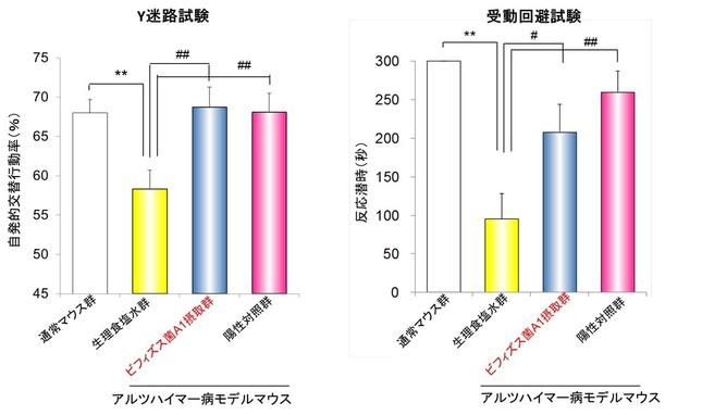 「ビフィズス菌A1」摂取による空間認識力及び学習・記憶能力の改善作用