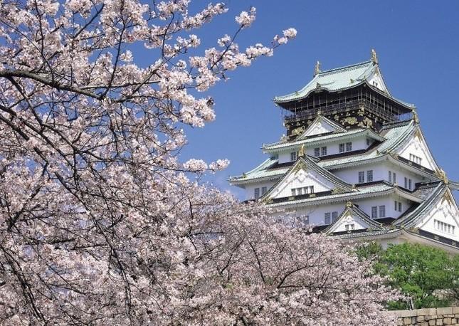 大阪城公園は3,000本の桜を有する人気花見スポット