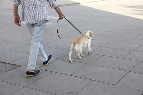 愛犬の散歩の途中に…