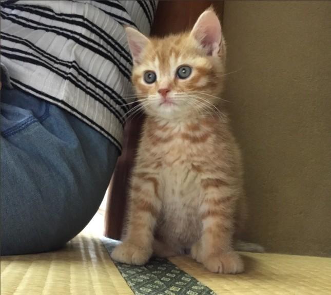 子猫のつくしちゃん(画像はまいきゃっと湯河原店提供)