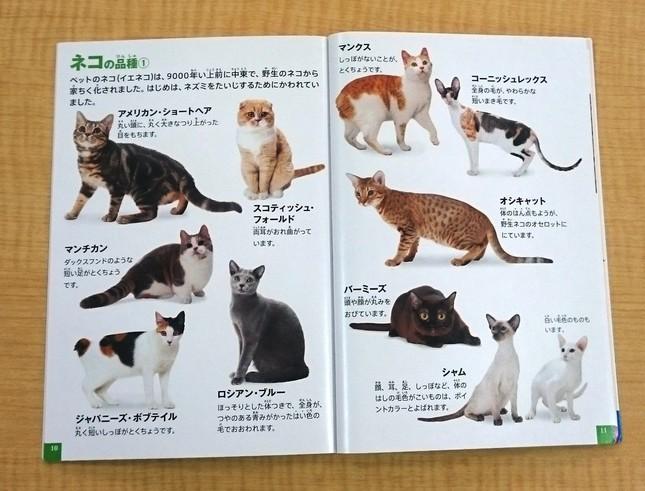 かわいい動物の写真やイラストが多数載っている