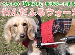 老犬や歩行困難になった犬をサポート サイズ調整可能な犬用車いす