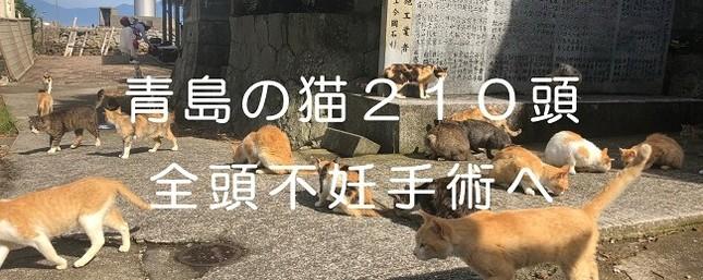 「猫の楽園」すべての猫に不妊手術実施
