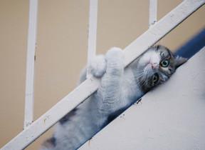 ズッコケネコたちについ笑っちゃう 東京・池袋で「残念すぎるネコ」写真展