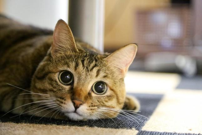 猫は人を幸せにする?
