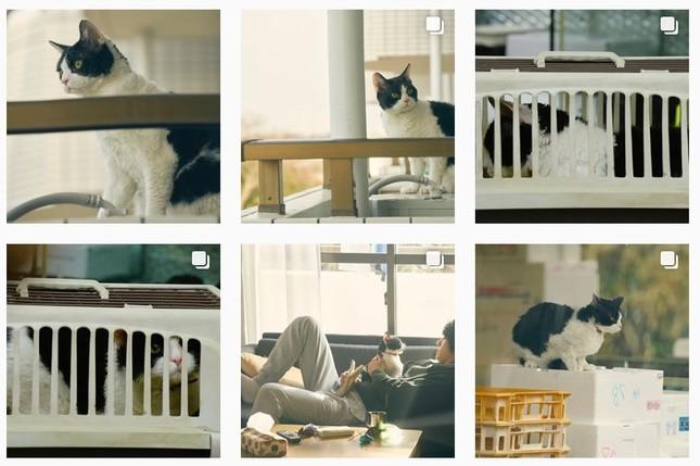 猫写真が盛りだくさん(画像は「旅猫リポート」のインスタグラムより)