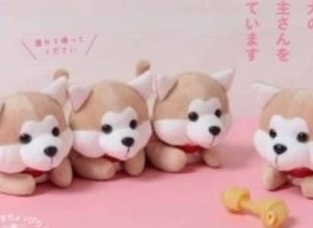 ザギトワが火付け役、秋田犬の人気急上昇 もふもふのぬいぐるみポーチBOOK