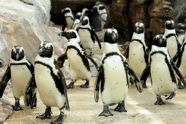 京都水族館のペンギンたち