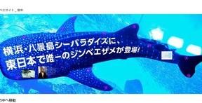 「ジンベエザメ」サイズの超巨大サイト スクロールしまくらないと全部見られない