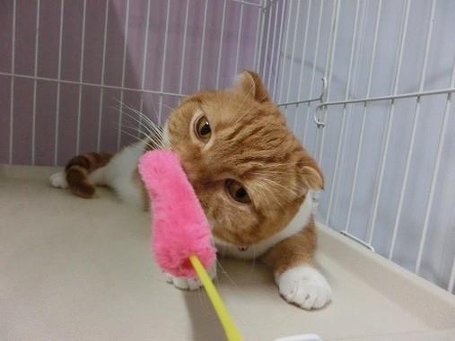 宿泊中のネコの様子(写真提供:羽田空港ペットホテル)