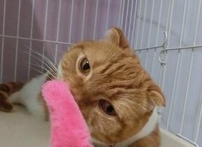 羽田空港ペットホテルの「愛」が伝わる 飼い主を安心させるサービスの中身