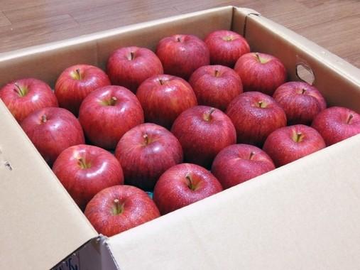 送られてきたリンゴにも、つい語りかける