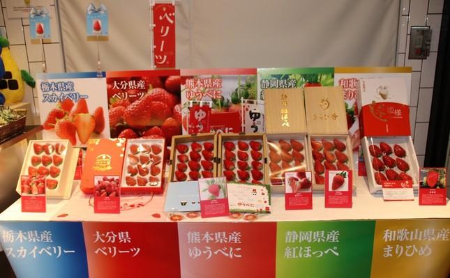 会場入り口横に展示されていた、各産地の「ブランド苺」