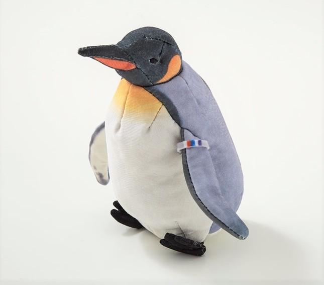 海遊館限定の識別タグ付きオウサマペンギン(成鳥のすがた)