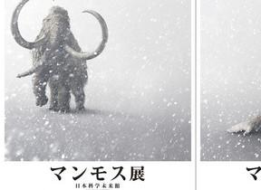 世界唯一の「古代ウマ」完全冷凍標本公開 日本科学未来館「マンモス展」で