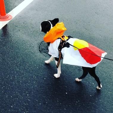かっぱを着た犬