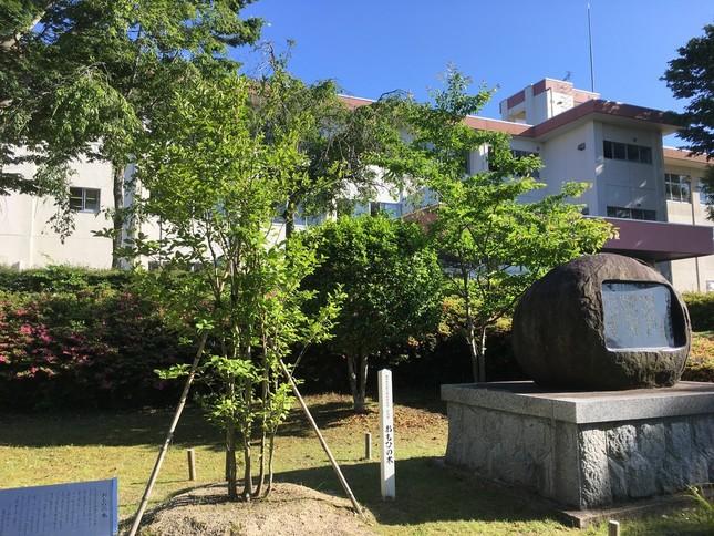 新地高校の校内に植えられている「おもひの木」