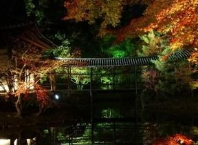 京都の紅葉の名所 夜の高台寺を貸切散策できる宿泊プラン