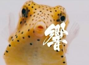 アシカやペンギン、イルカの「心音」が曲に 水族館の生き物の微細な音を録音