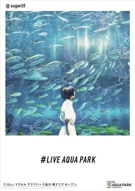 キャプション:フォトジェニック広告「LIVE AQUA PARK」(3)