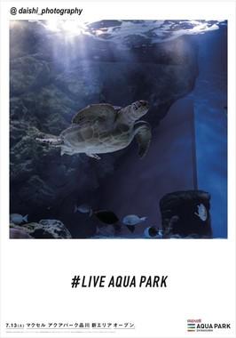 キャプション:フォトジェニック広告「LIVE AQUA PARK」(8)
