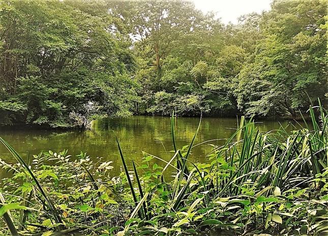 東京にも緑は多く、自然に接するのは難しくない=杉並区の和田掘公園で、冨永写す