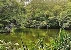 自然という癒し 鎌田實さんは信濃の雑木林で縄文人の声を聞く