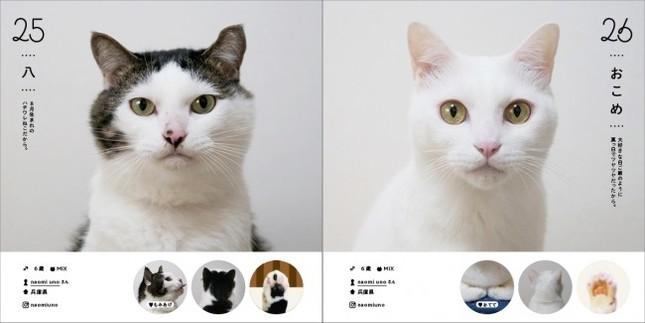 ハチワレ猫の「八」、白猫の「おこめ」(掲載例)