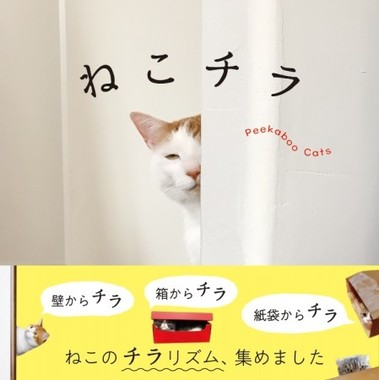 ネコのチラリズム満載