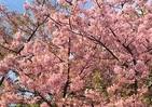 つい使いたくなる季語 川上弘美さんは「湯に浮く乳房」に春を愁う