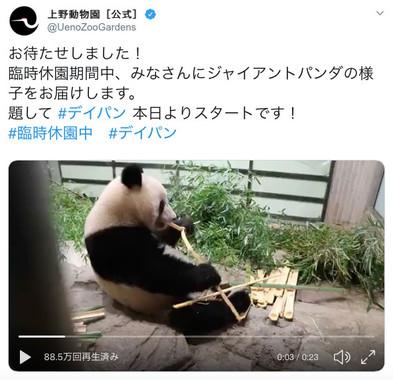 休園中の動物園が動物たちの動画を発信中(画像は上野動物園公式ツイッターより)