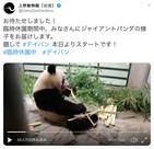 臨時休園でもパンダ、スマトラトラに会える 全国の動物園が動画発信