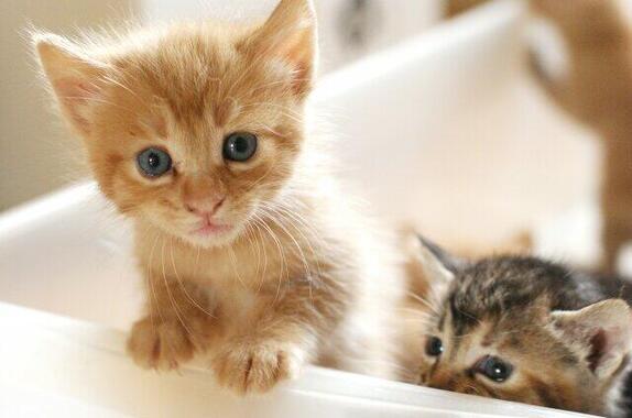 新型コロナウイルスがネコの間でも感染(画像はイメージ)