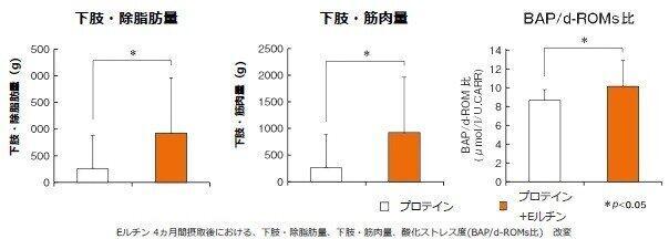 タンパク質(プロテイン)単体摂取時と、Eルチン同時摂取時との下肢筋肉量の比較