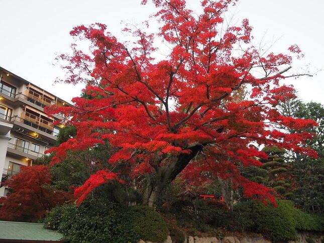 有馬温泉の紅葉