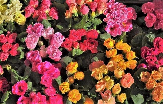 春が深まり、花屋の店先にも彩りがあふれる=世田谷区内で
