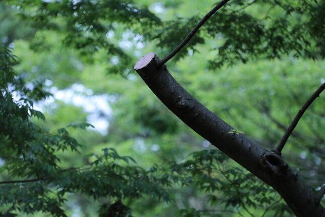 剪定されたと思われる枝はあったが
