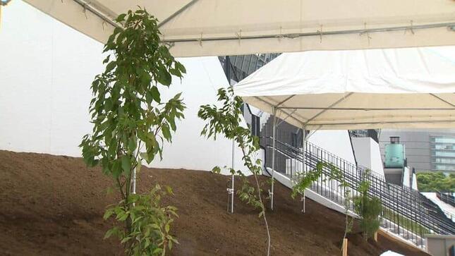 被災4県のシンボルツリーを植樹