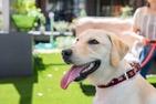 従順な人生 土屋賢二さんは飼い主を思い通りに動かす犬に学ぶ