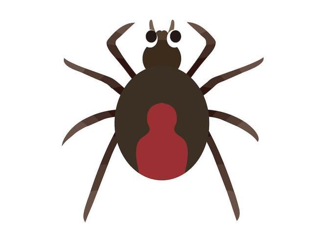 黒地に赤い模様、このクモに気をつけて