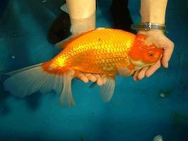 サンシャイン国際水族館「びっくりサイズの生きもの展+西表島の珍しい生物」展