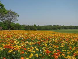 イベント期間中は花が咲き乱れる