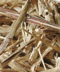 「WASARA」の素材は、さとうきびの搾りかすと葦